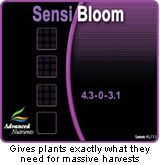1lt Sensi Bloom (A&B)